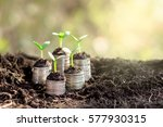 seedlings are grown on a coin... | Shutterstock . vector #577930315