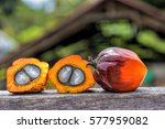close up of fresh oil palm... | Shutterstock . vector #577959082