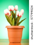 bunch of tulip flowers on the... | Shutterstock . vector #57799024