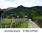 Amazing Wineyards With Small...