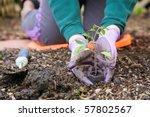 gardening | Shutterstock . vector #57802567
