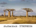 baobab alley in madagascar ... | Shutterstock . vector #578098036