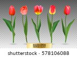 Realistic Vector Tulips Set....