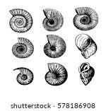 Sea Shells   Vector Image Of...