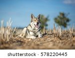wolfdog in autumn nature | Shutterstock . vector #578220445