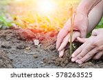 World environment day reforesting eco bio arbor CSR ESG ecosystems reforestation concept.Image of hands of father and daughter child growing tree on soil. Parent and child planting nature together.