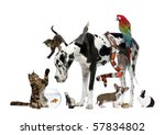 Stock photo group of pets together in front of white background 57834802