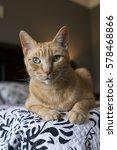 Small photo of Alert Tabby Cat