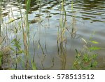 pond and water plants at summer