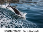 bottlenose dolphins swim with a ... | Shutterstock . vector #578567068