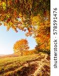 shiny beech tree on a hill... | Shutterstock . vector #578591476