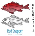 red snapper set with rods and... | Shutterstock .eps vector #578620552