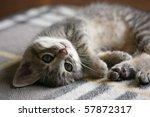 Stock photo lying kitten 57872317
