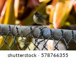 sparrow on a fence | Shutterstock . vector #578766355