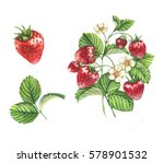 watercolor illustrations with... | Shutterstock . vector #578901532