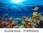 Underwater Coral Reef Landscap...
