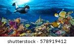 young men snorkeling exploring... | Shutterstock . vector #578919412