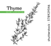 hand drawn thyme  plant with... | Shutterstock .eps vector #578929546