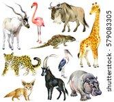 african animals watercolor... | Shutterstock . vector #579083305