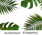 frame of tropical leaves... | Shutterstock . vector #579089932