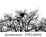 realistic silhouette of... | Shutterstock .eps vector #579118492