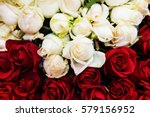 Stock photo red and white rose flowers for valentine background selective focus at middle white rose 579156952