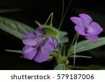 Pink Impatiens With Grass...
