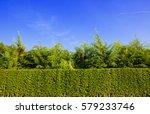 hedge against the sky | Shutterstock . vector #579233746