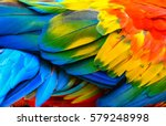 Stock photo close up of scarlet macaw bird s feathers 579248998