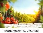 tomatoes and summer day  | Shutterstock . vector #579250732