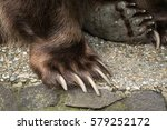 detail of the bear paws with... | Shutterstock . vector #579252172
