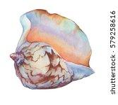 illustrations of sea shells.... | Shutterstock . vector #579258616