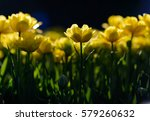 close up spring flowers... | Shutterstock . vector #579260632