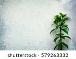 background white cement wall... | Shutterstock . vector #579263332