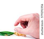 medicine herb. herbal pills in... | Shutterstock . vector #579291556