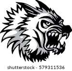 wolf head which bares his teeth.... | Shutterstock .eps vector #579311536