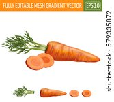 carrot on white background.... | Shutterstock .eps vector #579335872