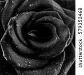 Black And White Photo   Rose...