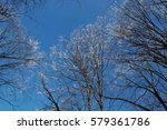 forest with frozen trees | Shutterstock . vector #579361786
