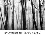 english woodland on a foggy... | Shutterstock . vector #579371752
