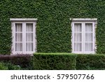 windows on ivy wall | Shutterstock . vector #579507766