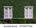 windows on ivy wall   Shutterstock . vector #579507766