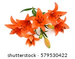 Stock photo beautiful orange lily flowers isolated on white background 579530422