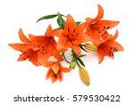 Beautiful Orange Lily Flowers...