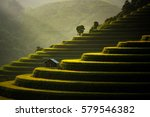 The Rice Fields On Terraced Of...