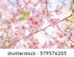 fantastic cherry blossom in the ... | Shutterstock . vector #579576205