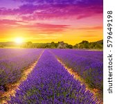 lavender fields in provence at... | Shutterstock . vector #579649198