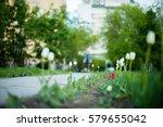 flowers tulips on the flowerbed ... | Shutterstock . vector #579655042