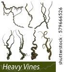 various 3d rendered heavy vines ...   Shutterstock . vector #579666526
