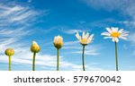 stages of growth and flowering... | Shutterstock . vector #579670042